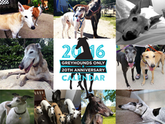 2016 Greyhounds Only Calendar
